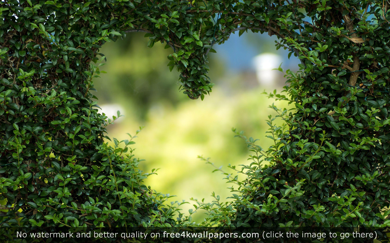 Heart Green Leaves HD Wallpaper