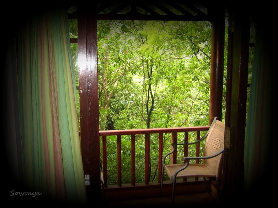 View from a treetop in the resort in Wayanad Best