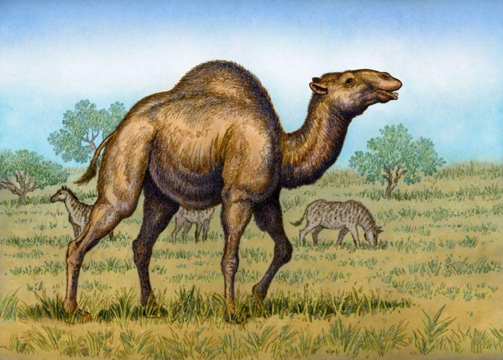 Titanotylopus Nebraskensis By Https Www Deviantart Com Willemsvdmerwe On Deviantart Prehistoric Animals Extinct Animals Prehistoric Wildlife