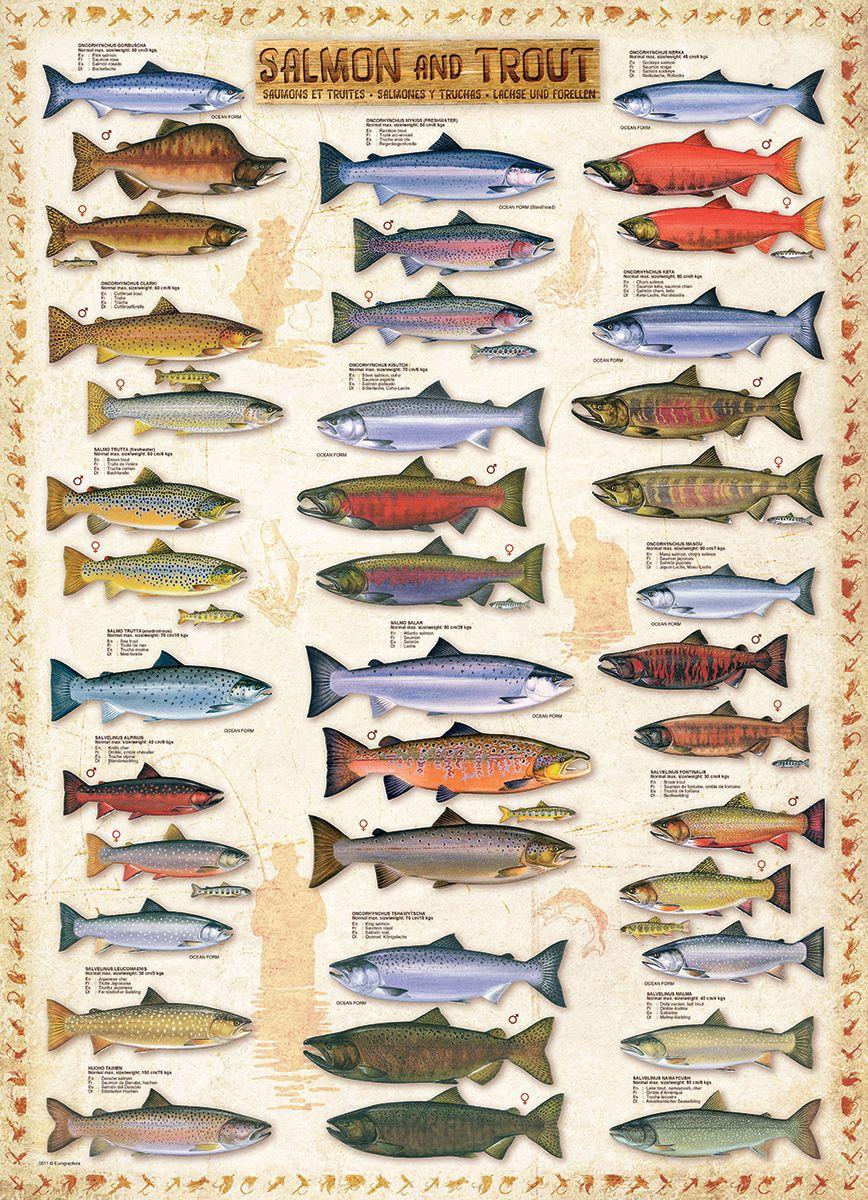 Salmon & Trout 1000-Piece Puzzle. Finished Puzzle Size: 19.25\