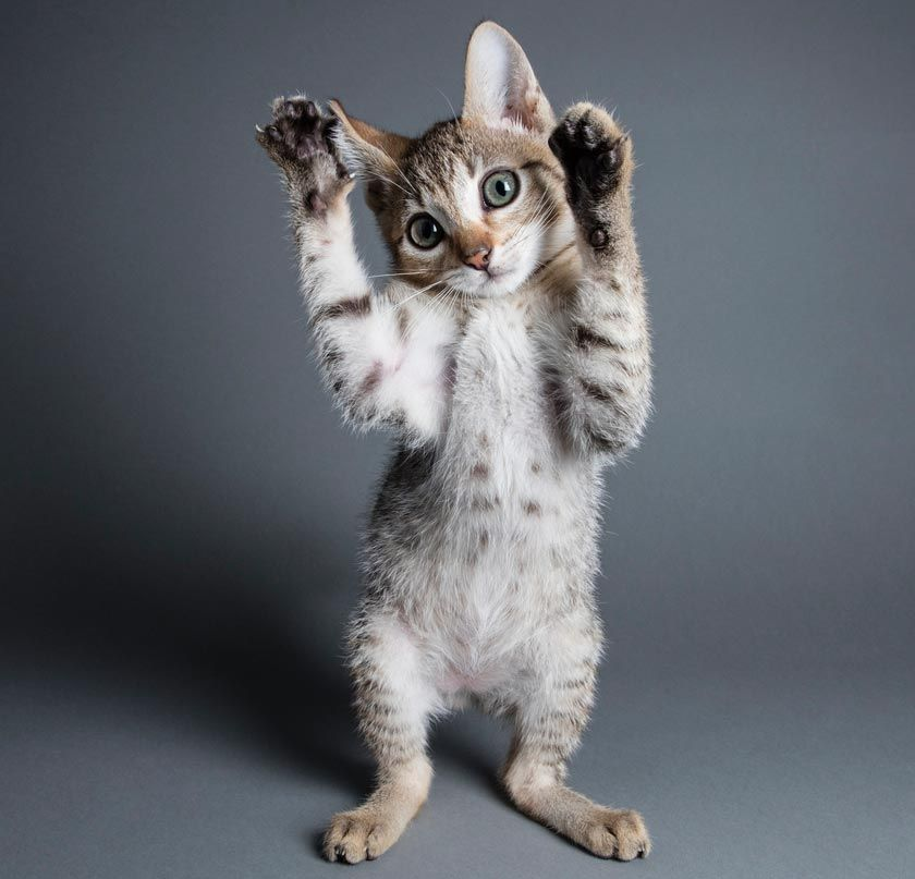 Declawing Banned in Another Canadian Province cats
