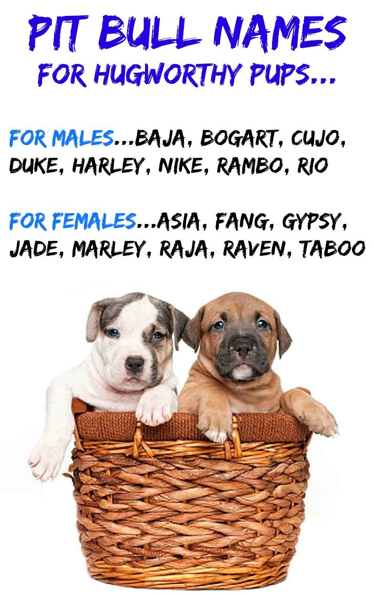 Names For Gangster Dogs