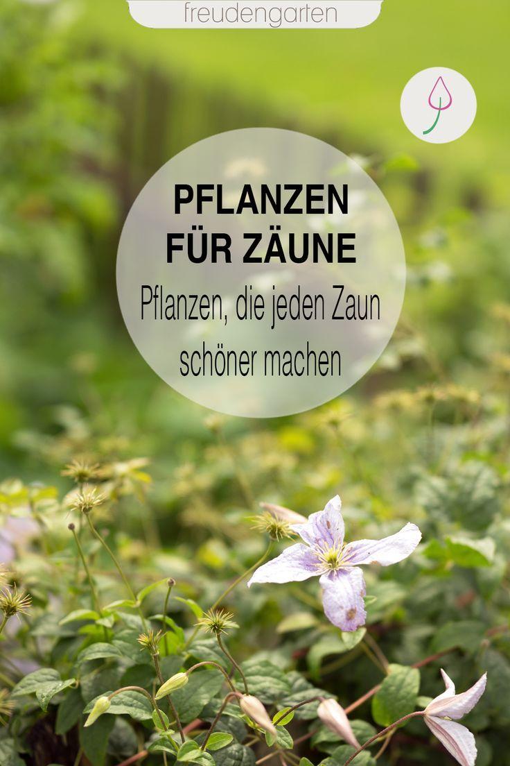 Zaun mit Pflanzen verschönern #beetanlegen