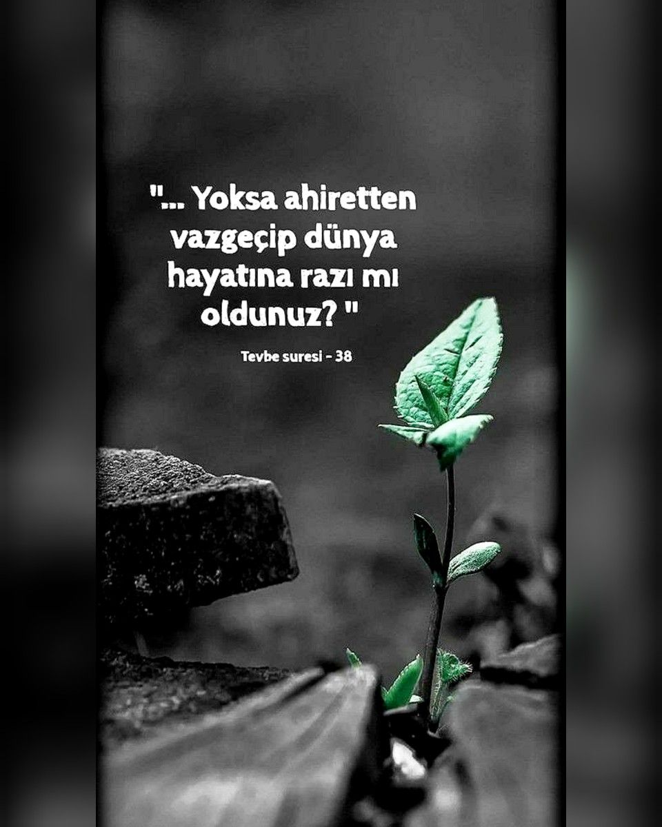 Pin By Karimliyy On Sozlər