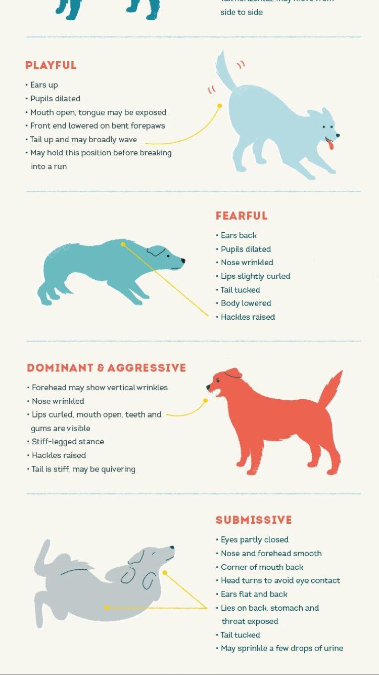 Dog Behavior By Little Colleen Lip Wrinkles Dog Behavior Nose