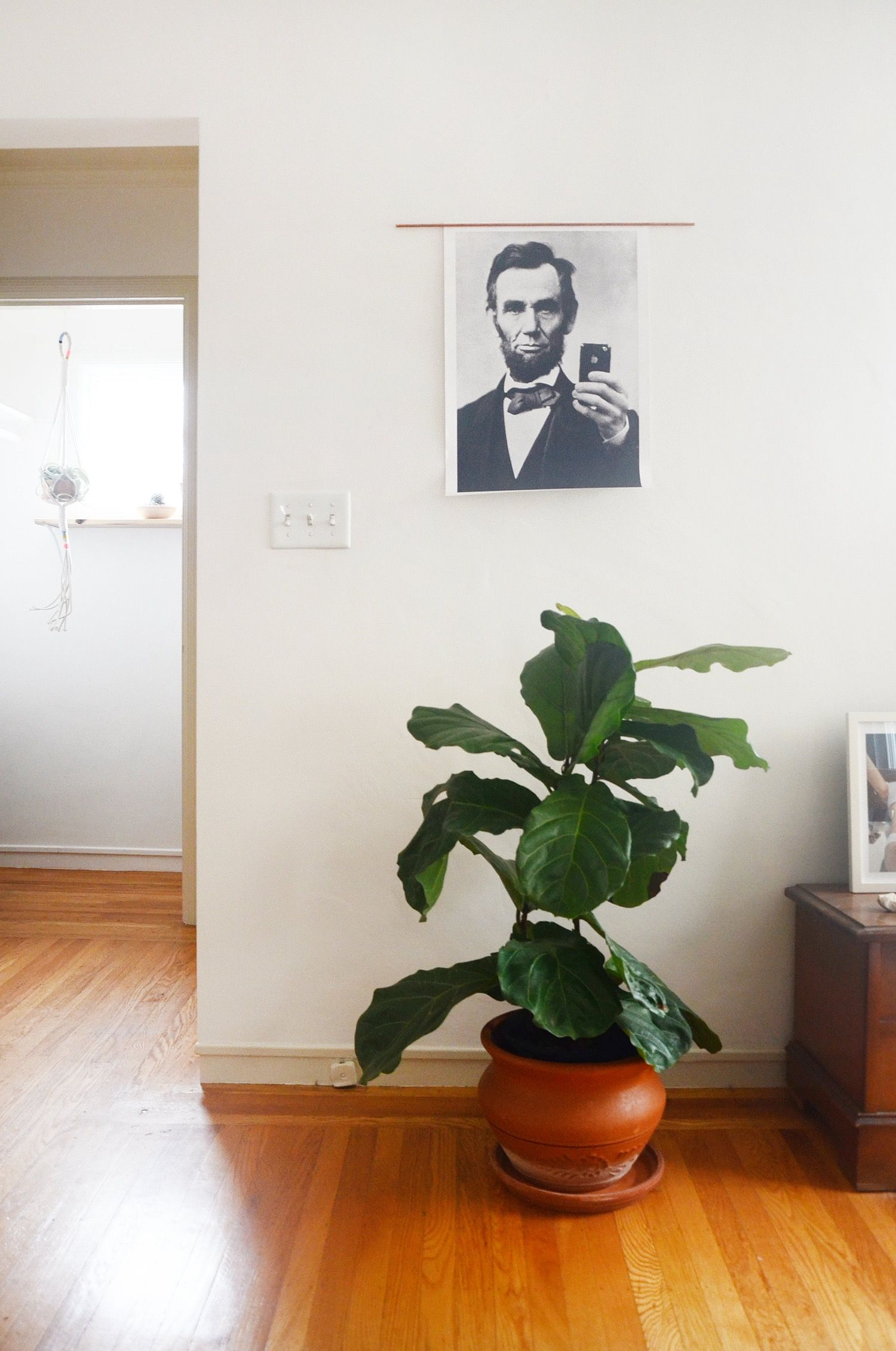 "We've Reached Peak Fiddle Leaf: Is This the New ""It"" Plant?"