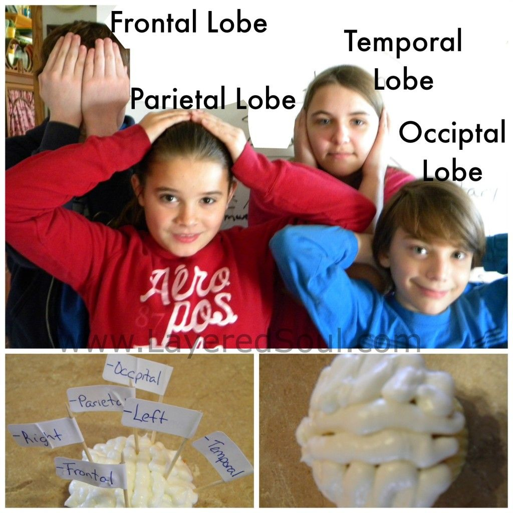 Learning The Lobes Of The Brain By Playing Games And