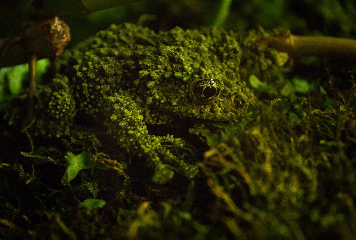 The QI Elves on Frog species, Types of frogs, Animals of