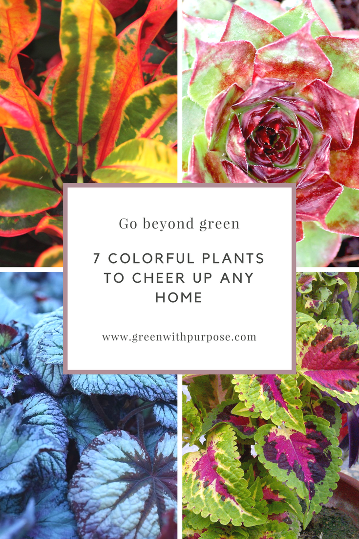 Beyond Green Colorful Houseplants To Brighten Up Your 400 x 300