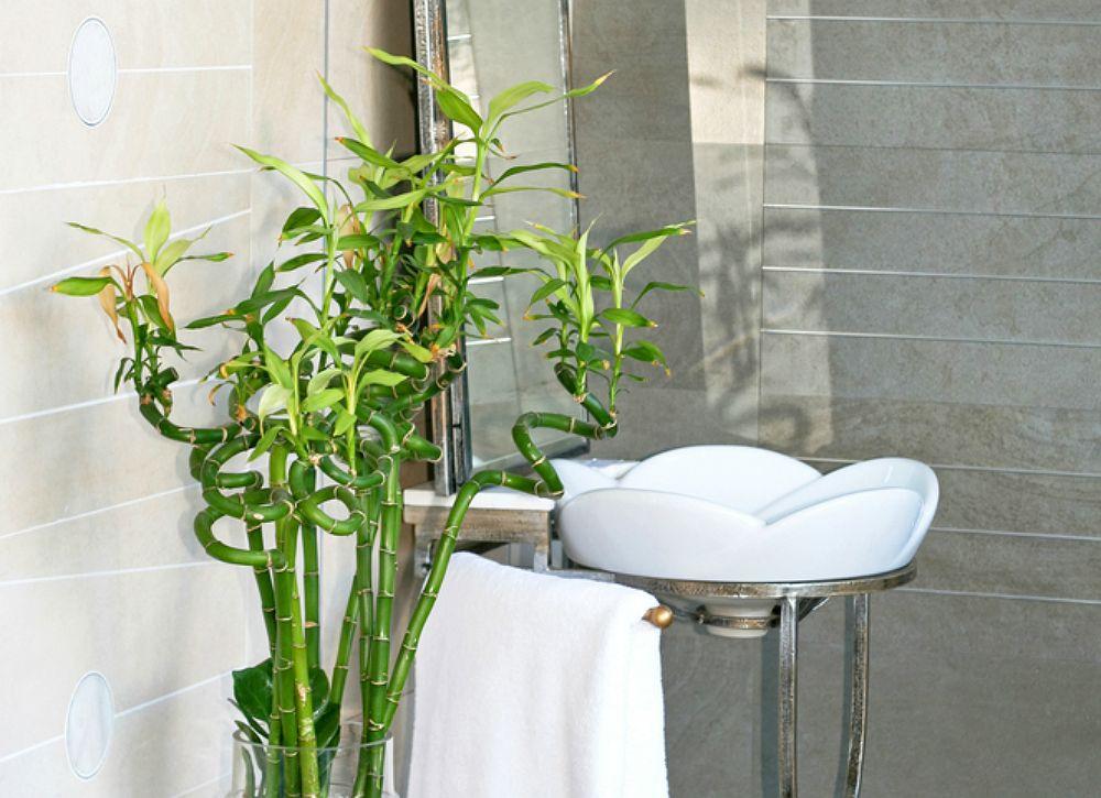 The 10 Best Plants For Your Bathroom Bathroom Plants Plants Indoor Plants