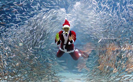 Znalezione obrazy dla zapytania diving christmas