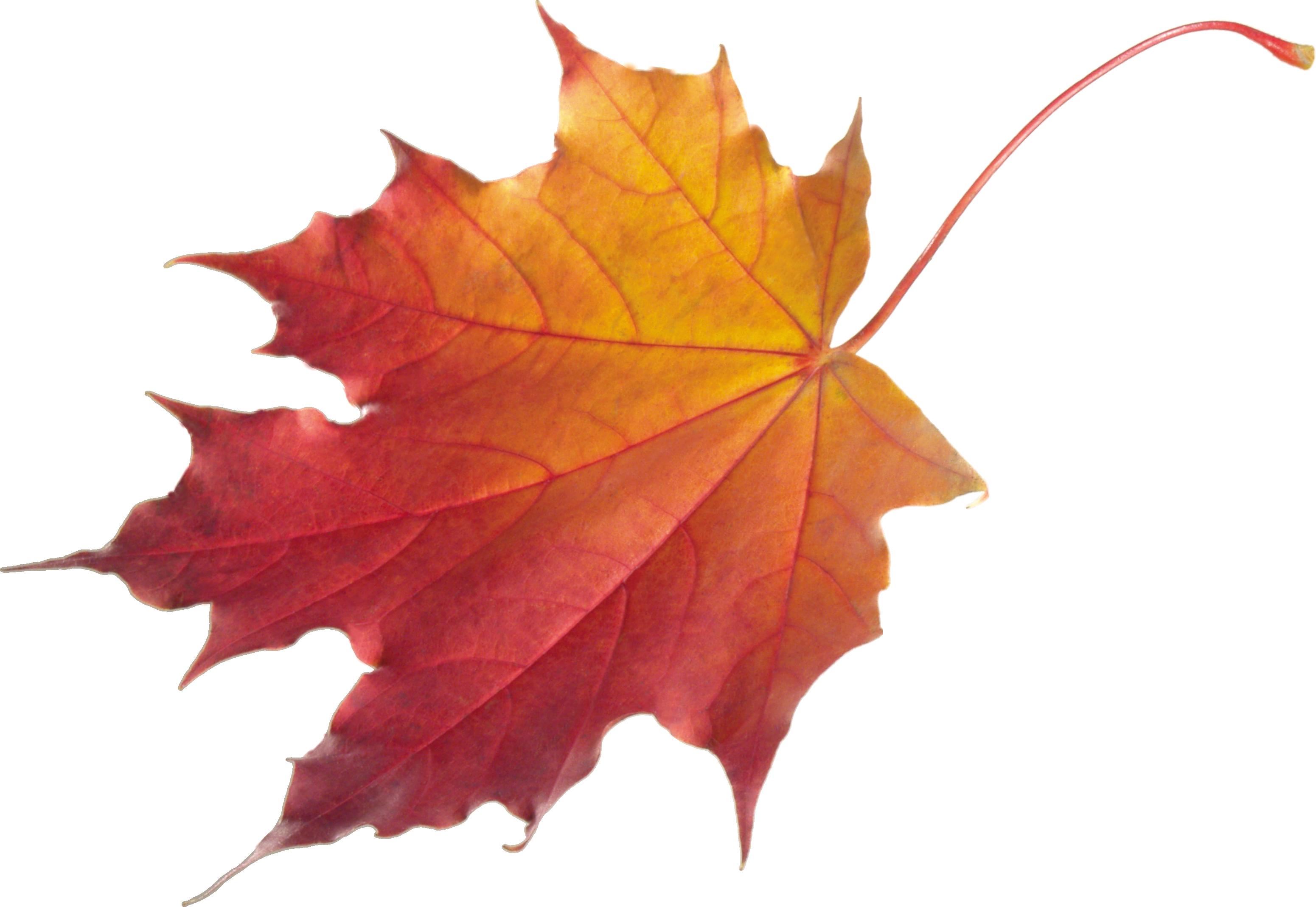 Autumn Leaves Png3601 Png 3101 2136 Osennie Listya Listya Padayushie Listya