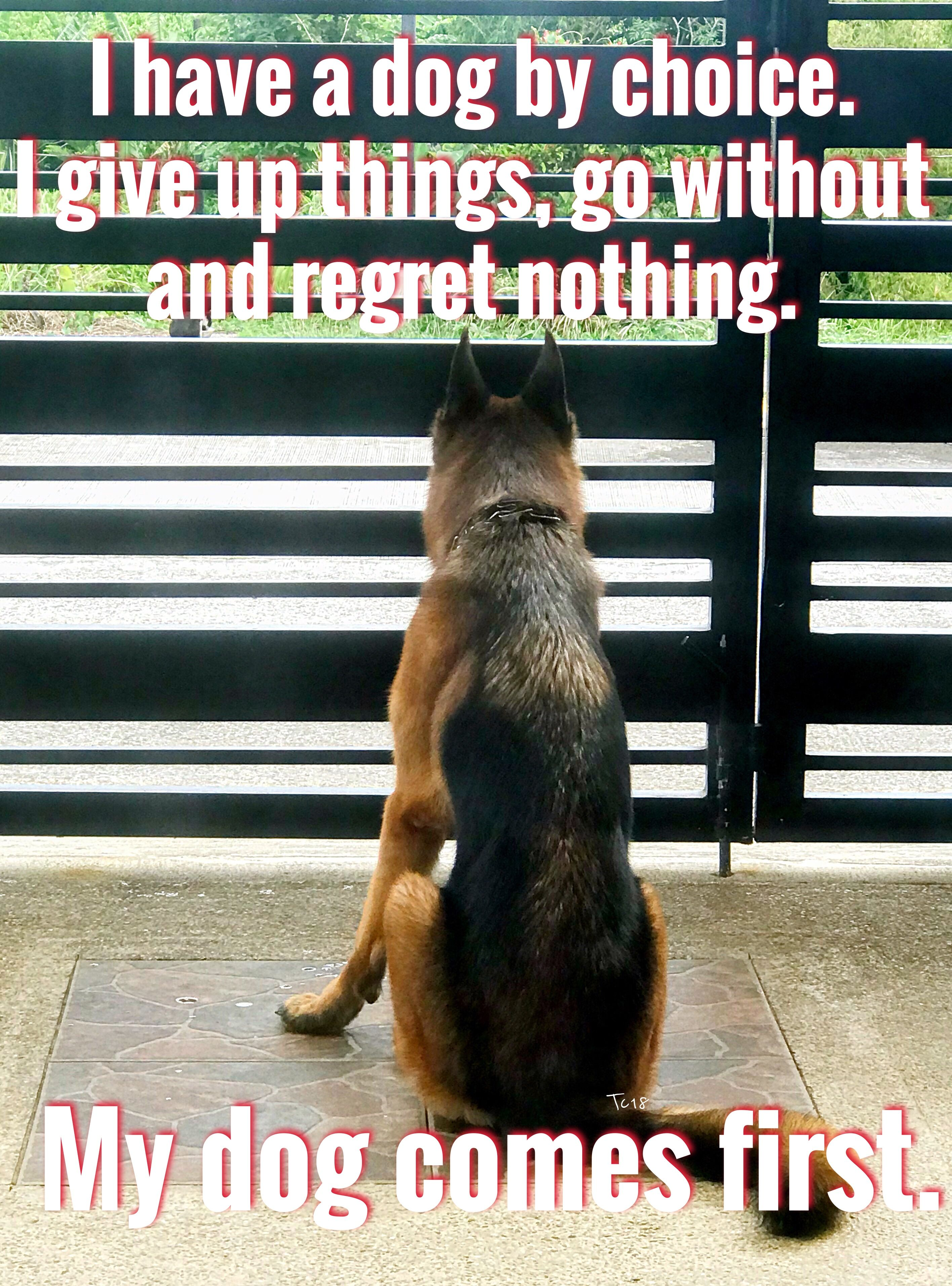 The German Shepherd Ares Dog Quotes Dogs Dog Love