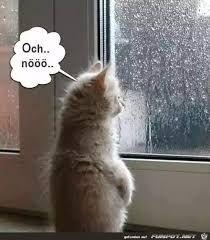 Bildergebnis für gassi gehen bei regen und sturm lustig ...