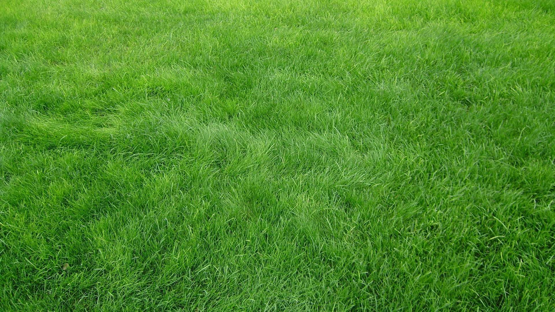 Ultra Hd Wallpaper Flower 4k Wallpaper Grain Grass Field Green