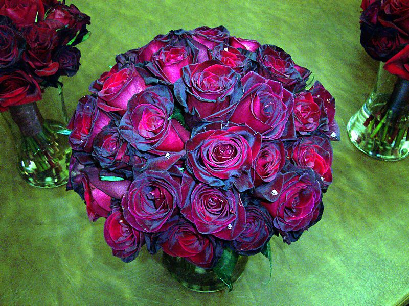 thee most beautiful bouquet of black baccara roses i have. Black Bedroom Furniture Sets. Home Design Ideas