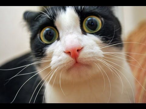 funny cat vines for children, funny cat vines for kids, funny cat vines compilation, funny cat vines - http://positivelifemagazine.com/funny-cat-vines-for-children-funny-cat-vines-for-kids-funny-cat-vines-compilation-funny-cat-vines/ http://img.youtube.com/vi/a1sA1DnV8Ck/0.jpg  https://www.youtube.com/channel/UCk05Zm9QRl64-5xbnY6qj7w funny cat 2015, funny cat videos 2015, funny cat pranks videos, funny cat vines, funny cat … ***Get your free domain and free site build