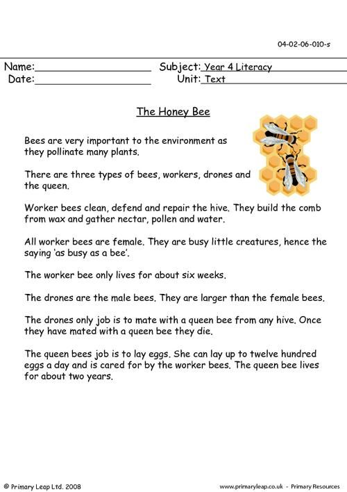 PrimaryLeap.co.uk - The honey bee Worksheet | Insect-A Inspect-A in ...