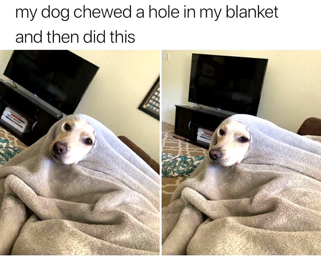 Lol These Dog Memes Are Insane Funny Wolf Dog Meme Funny Animal Jokes Cute Animal Memes Funny Dog Memes