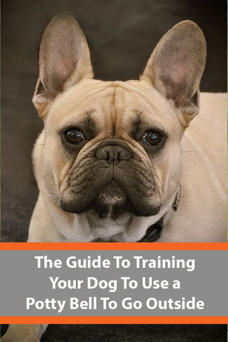 Train Your Dog To Use A Potty Bell To Go Outside Dog Behavior