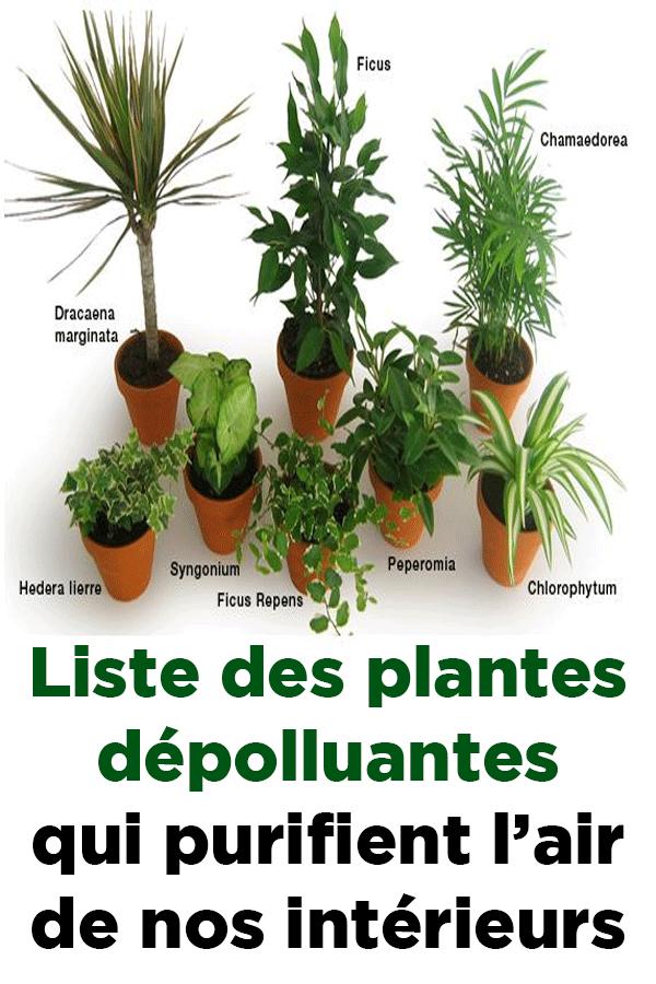 Liste des plantes dépolluantes qui purifient l'air de nos intérieurs   Plantes dépolluantes ...
