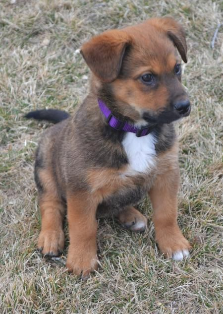 Rylie the mixed breed puppy what a cutie puppies for Fluffy little dog breeds