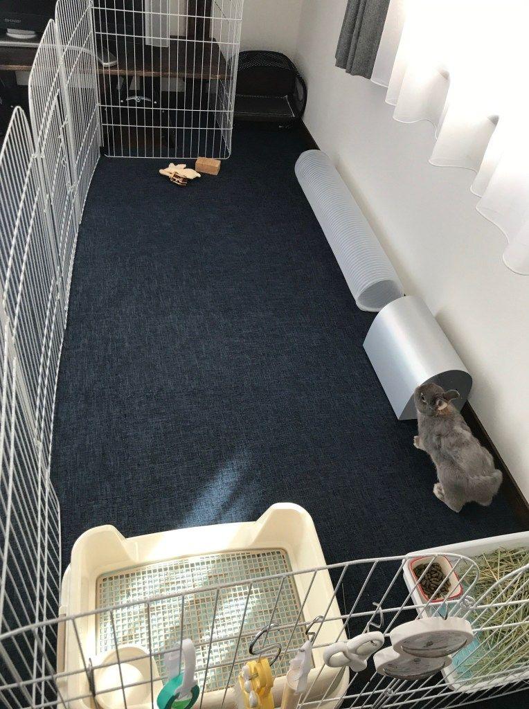うさぎをリビングで飼う 部屋んぽにおすすめ サークルとレイアウト ネザーランドドワーフ うさぎのルビー ウサギ用ハウス ウサギ 部屋 部屋