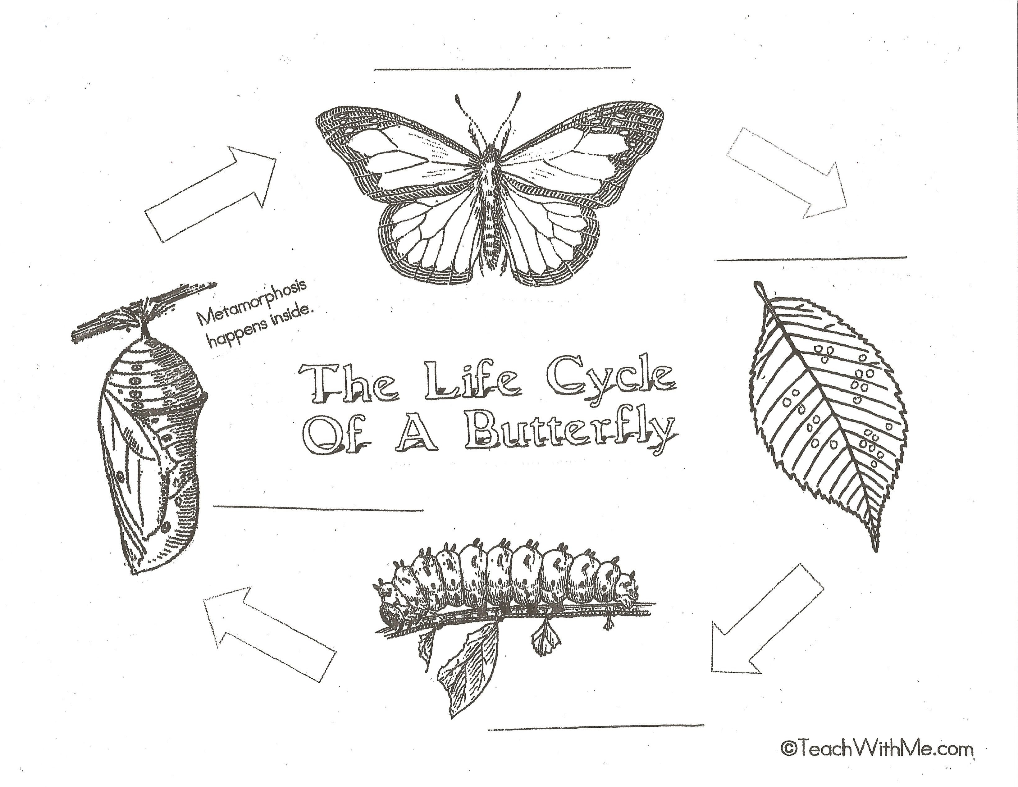 The Life Cycle Of A Butterfly Activities Butterfly Life Cycle