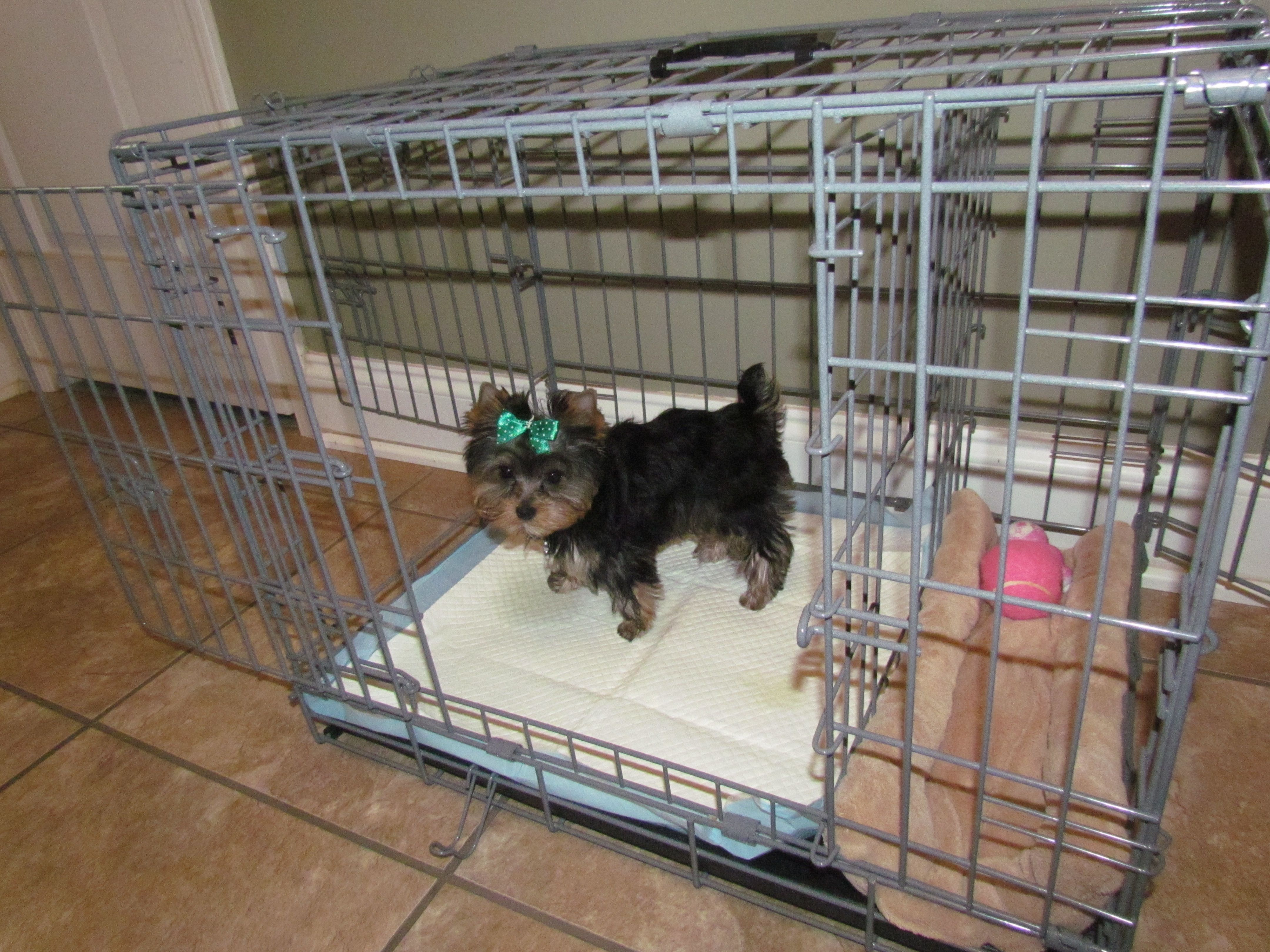 Dog Toilet Training – The Modern Method