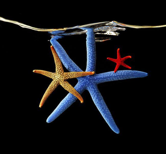 """A beleza do fundo do mar é retratada no livro """"Sea"""" pelo fotógrafo americano Mark Laita"""