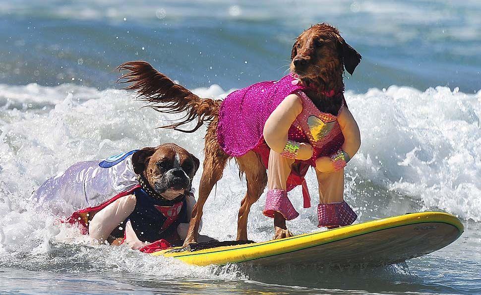 2017 Surf City Dog Compeion In Huntington Beach