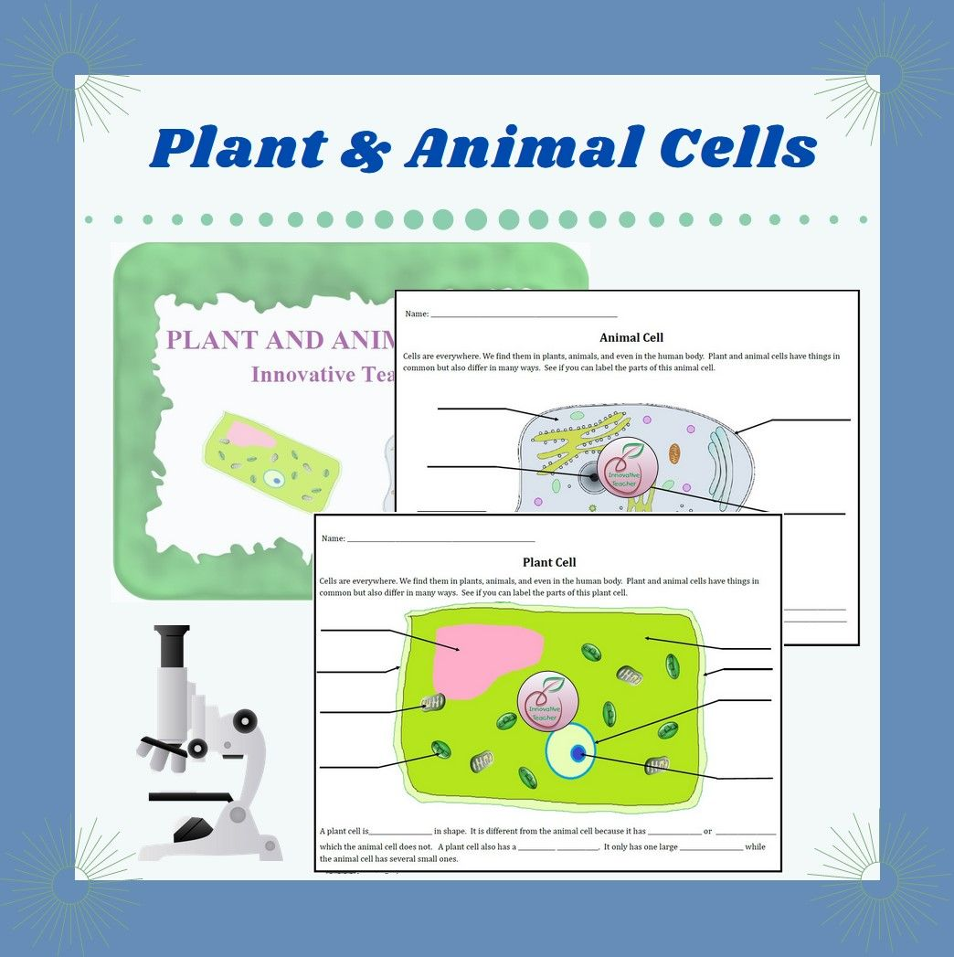Plant And Animal Cell Worksheet In