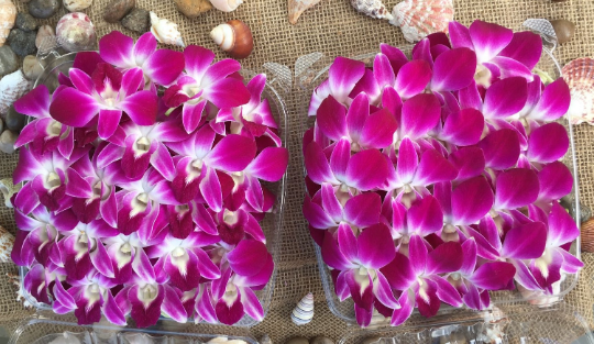 Purple Edible Orchids Flowers Orchid Flower Orchids Floral Industry