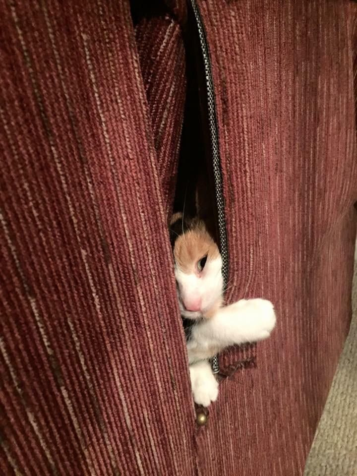 My cat Kit found the one hole in the couch. http://ift.tt/2szJmgZ