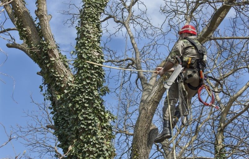 4 Reasons To Remember While You Need To Hire An Arborist