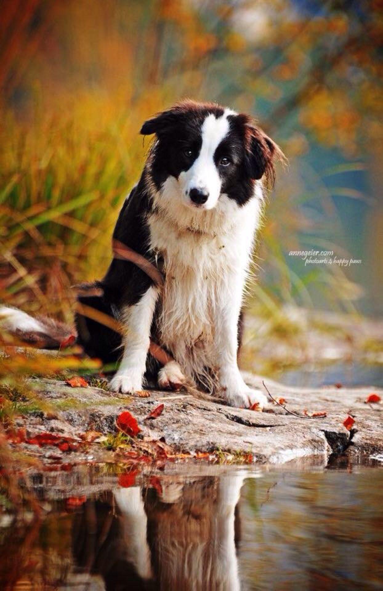 Moment S Tiere Hund Hunde Hundefotos