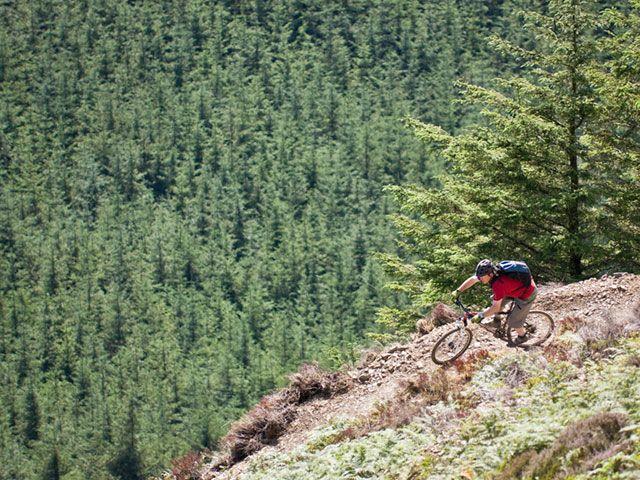 Mountain biking in Whinlatter Forest near Keswick
