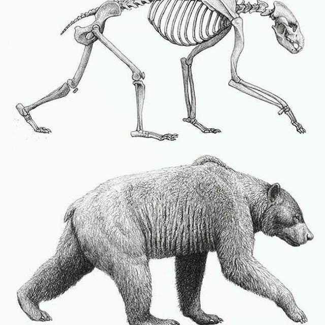 Esqueleto De Oso I Love It Animals Animal Bear Skeleton Blackandwhite Infographic Veterinaria Photoofth Anatomia Animal Anatomia Veterinaria Animales