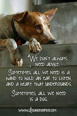 Sometimes All We Need Is A Dog Dog Quotes Dogs I Love Dogs