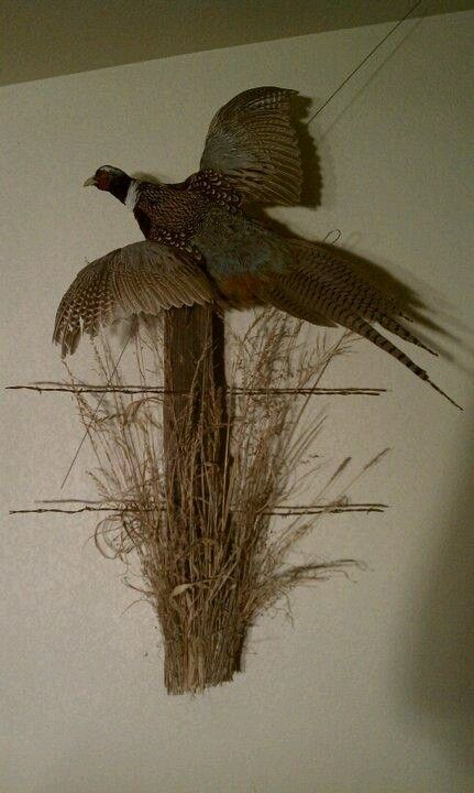 Our Pheasant Mount Bird Taxidermy Pheasant Mounts Taxidermy Mounts