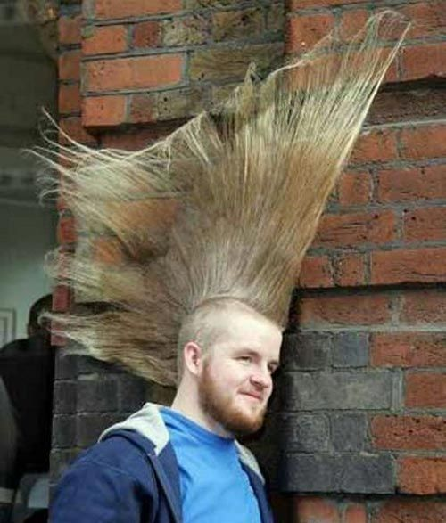 Hes Going For Heightvolume Hairy Situations Hair Humor Funny