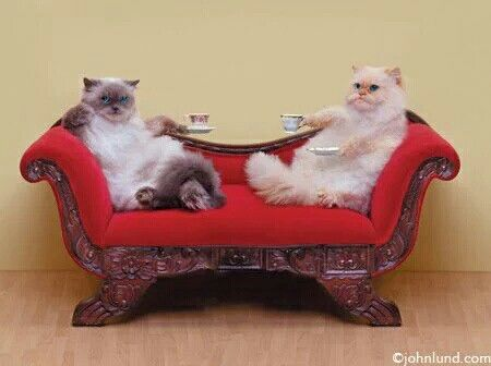 Image result for cats having tea