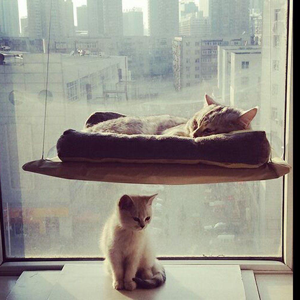 whitelotous cat basking window hammock perch cushion bed hanging shelf seat     you can whitelotous cat basking window hammock perch cushion bed hanging      rh   pinterest