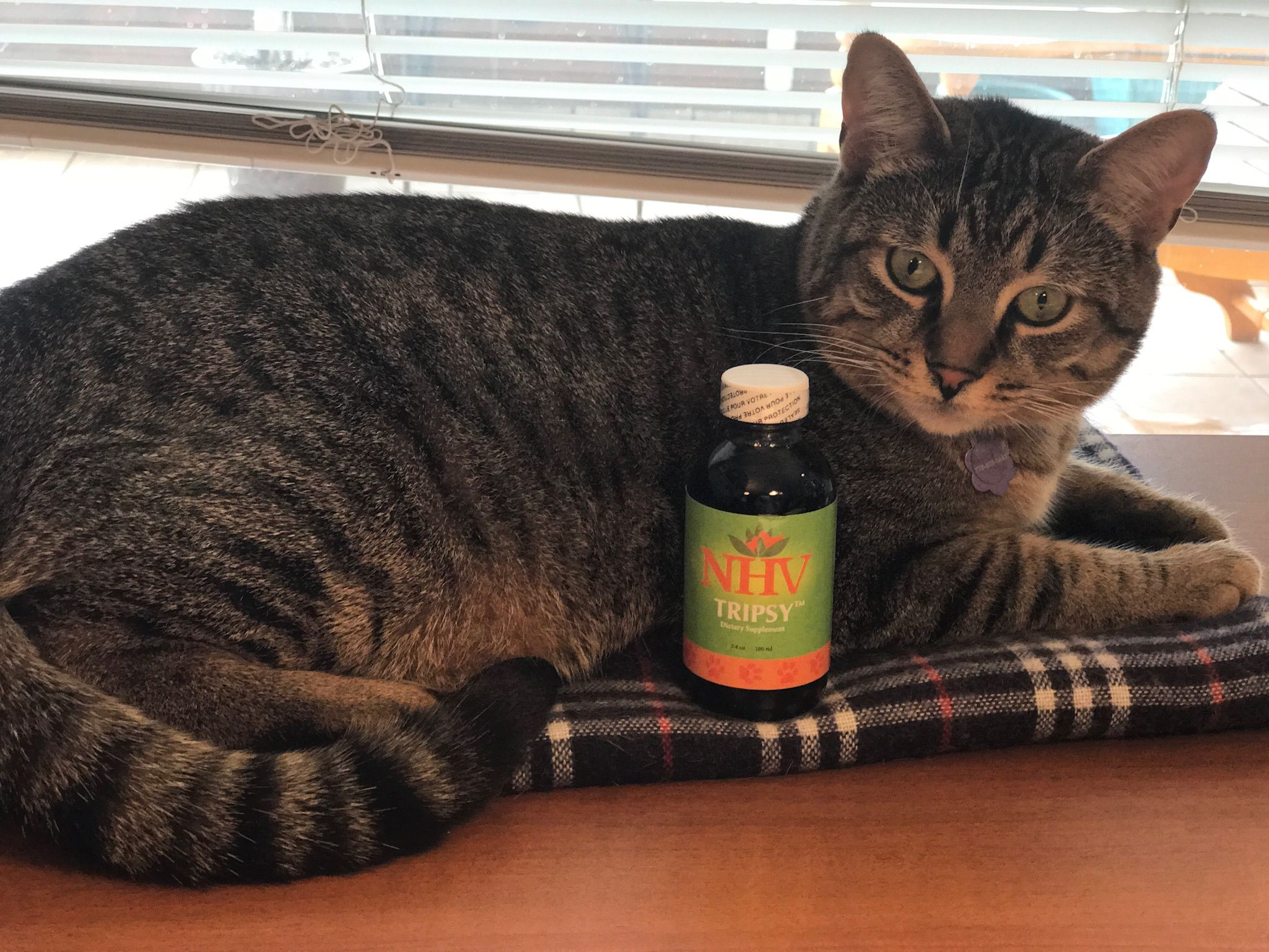Tripsy™ for cats Remedies for kidney infection, Cat
