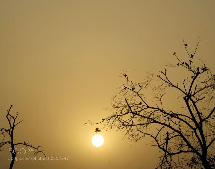 SUN GOLD by umerattariue #landscape #travel