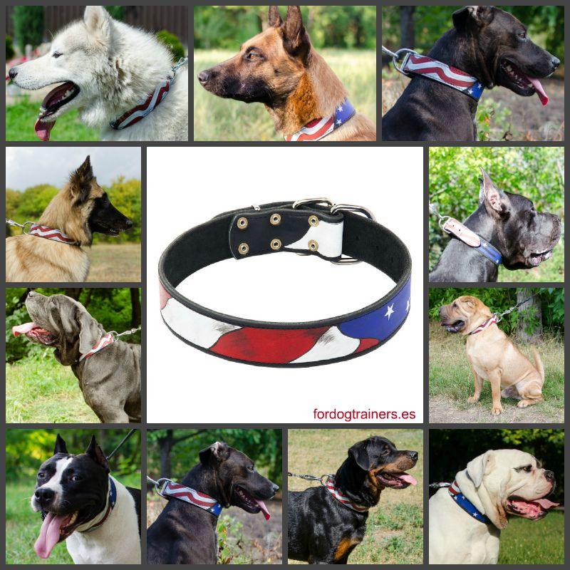 Collar Cuero Adiestramiento Y Paseo Perro Bandera Americana Paseo De Perros Perros Pasear Perros