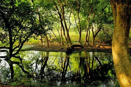 Free Nature Wallpaper Beautiful Green Reflection Full Size HD Quality Collection For