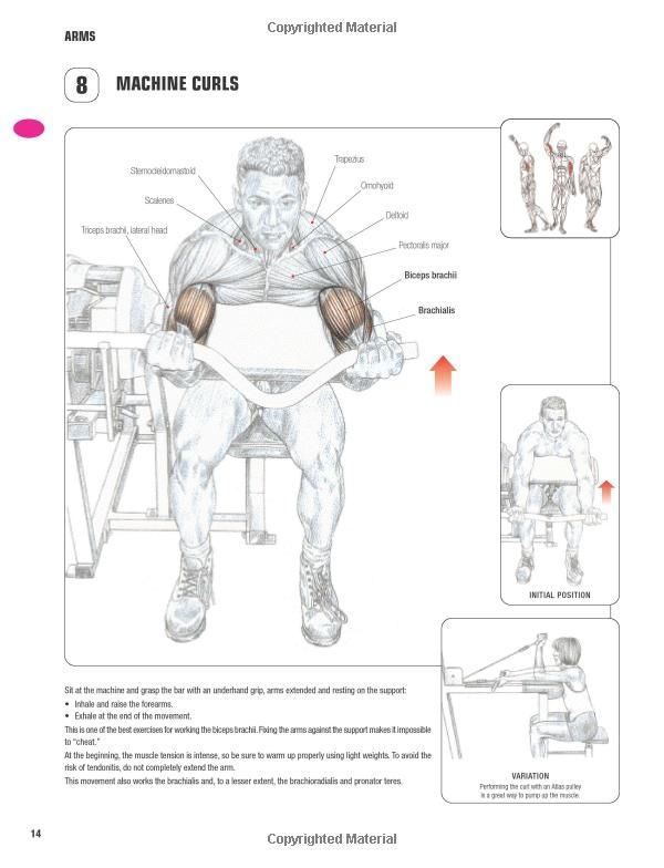 Strength Training Anatomy-3rd Edition: | Workout Charts | Pinterest ...