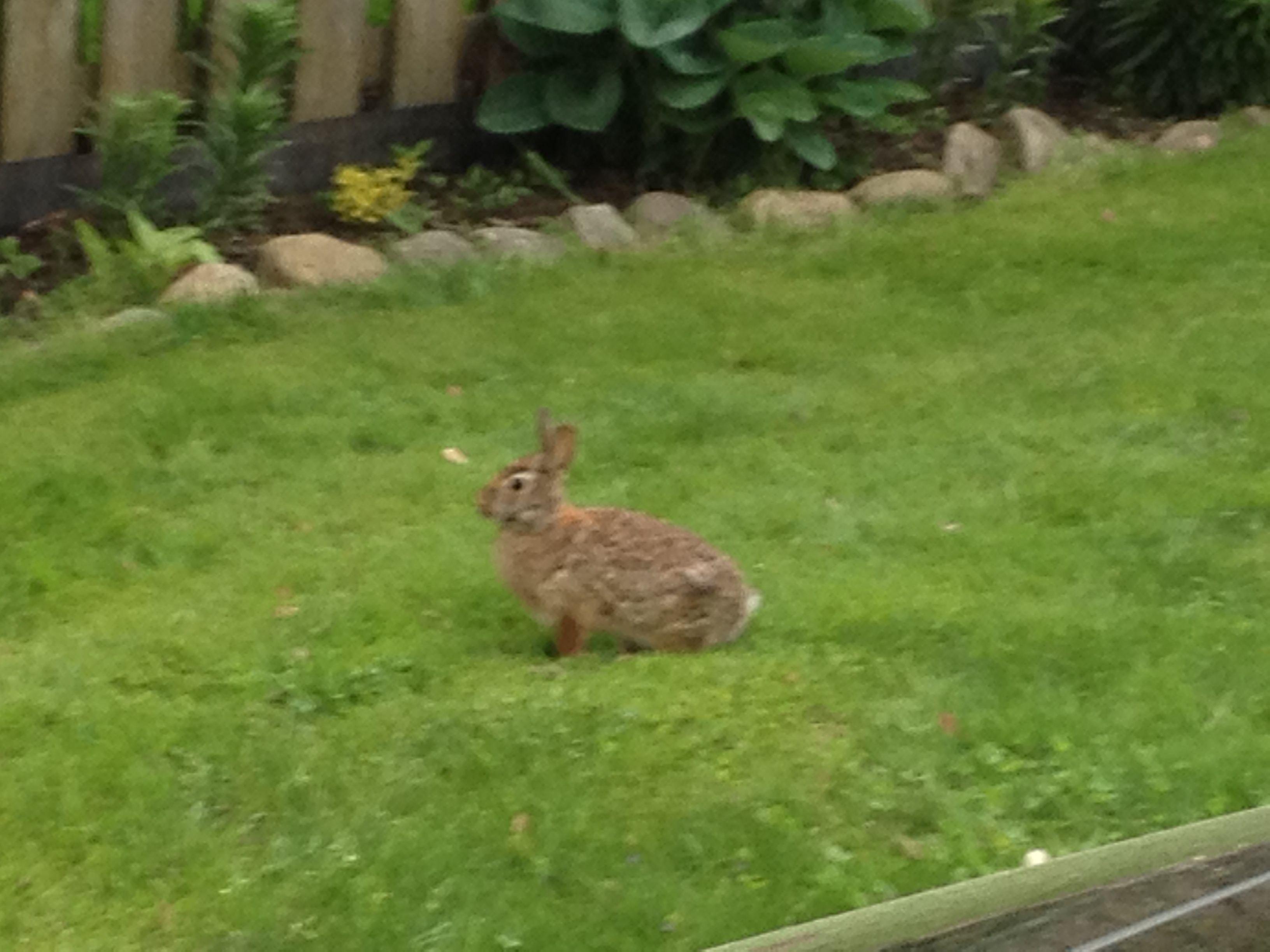 Rabbit in the yard | Photography | Pinterest