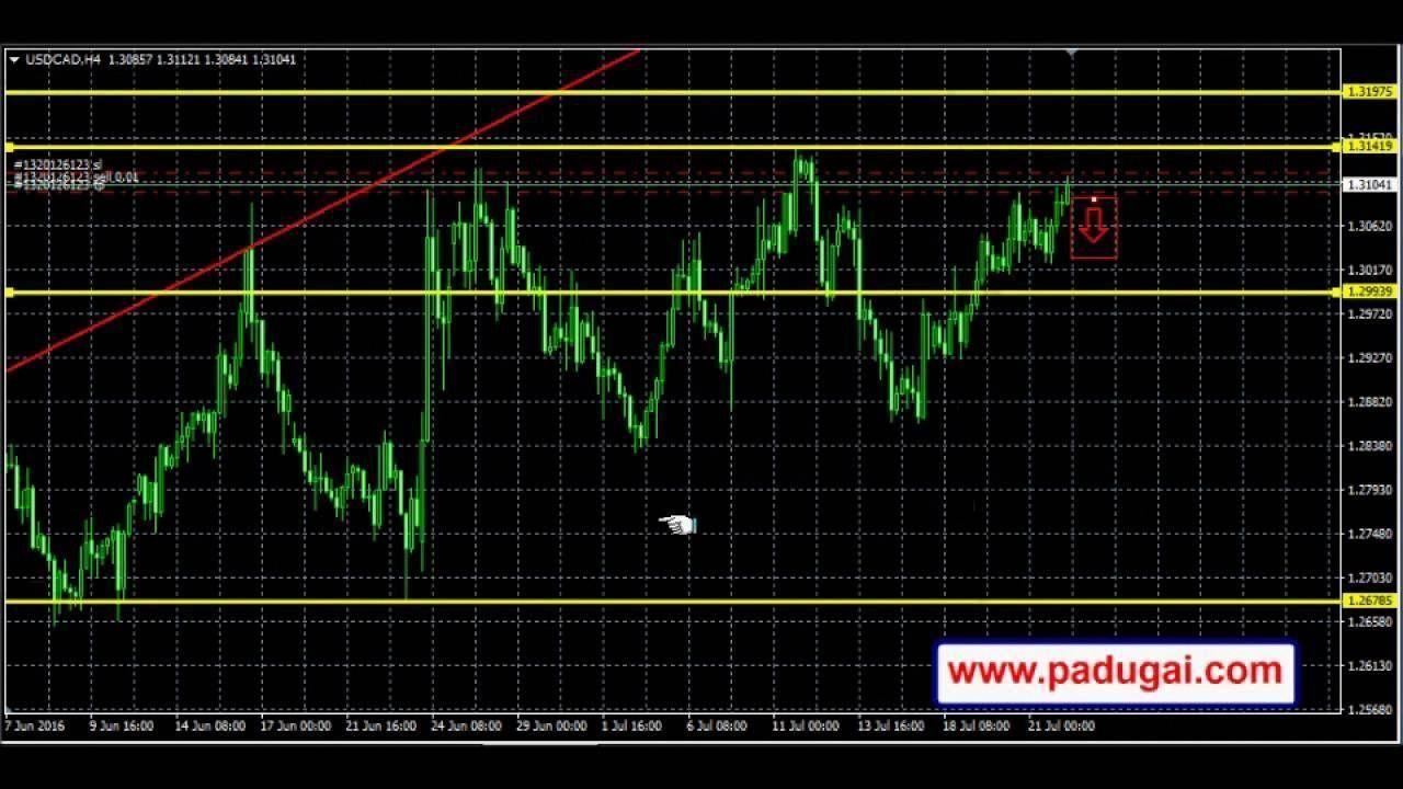 Forex Trading Signal India Forex Trader Indiancashier